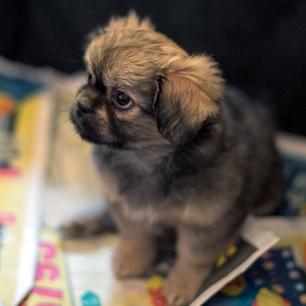 En søt liten gutt